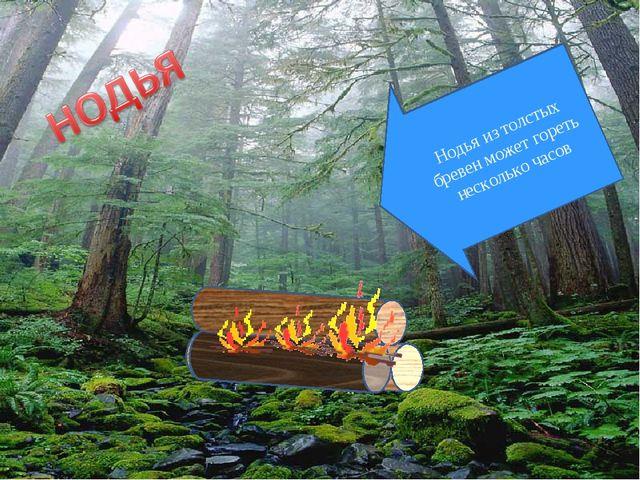 Нодья из толстых бревен может гореть несколько часов