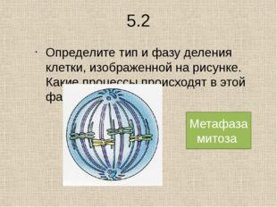 1. Установите последовательность процессов митоза : А) деспирализация хромосо