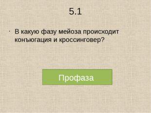 5.1 В какую фазу мейоза происходит конъюгация и кроссинговер? Профаза