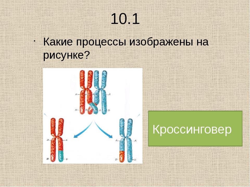 6.2 Различия митоза и мейоза (7)