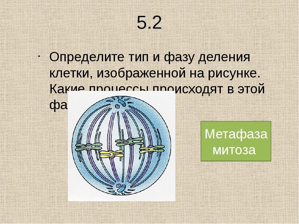 1. Установите последовательность процессов митоза : А) деспирализация хромосо...