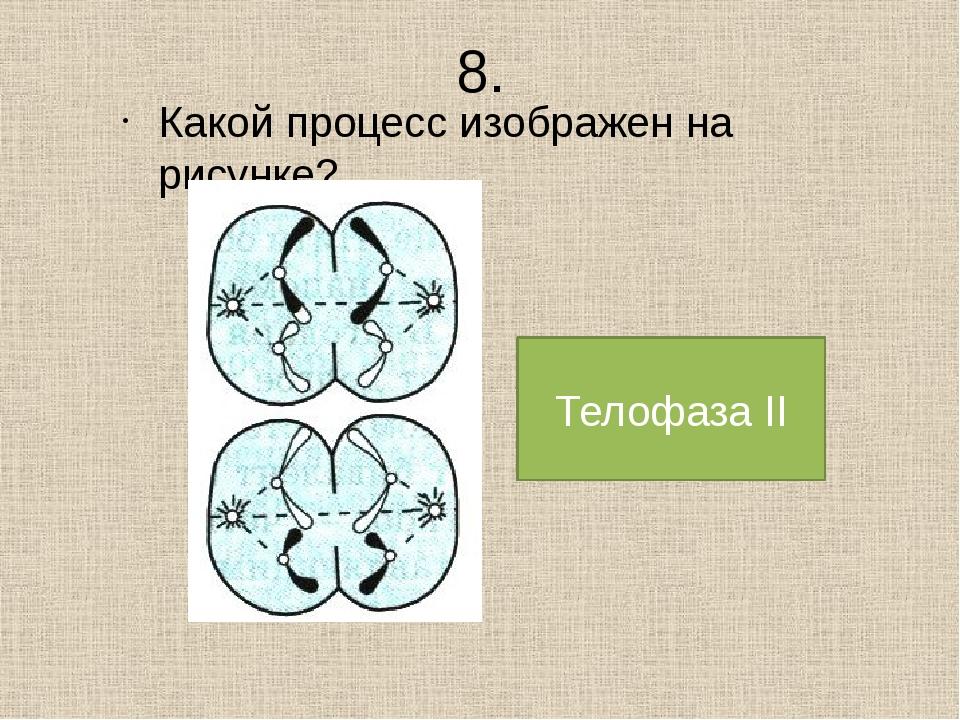 8. Какой процесс изображен на рисунке? Телофаза II