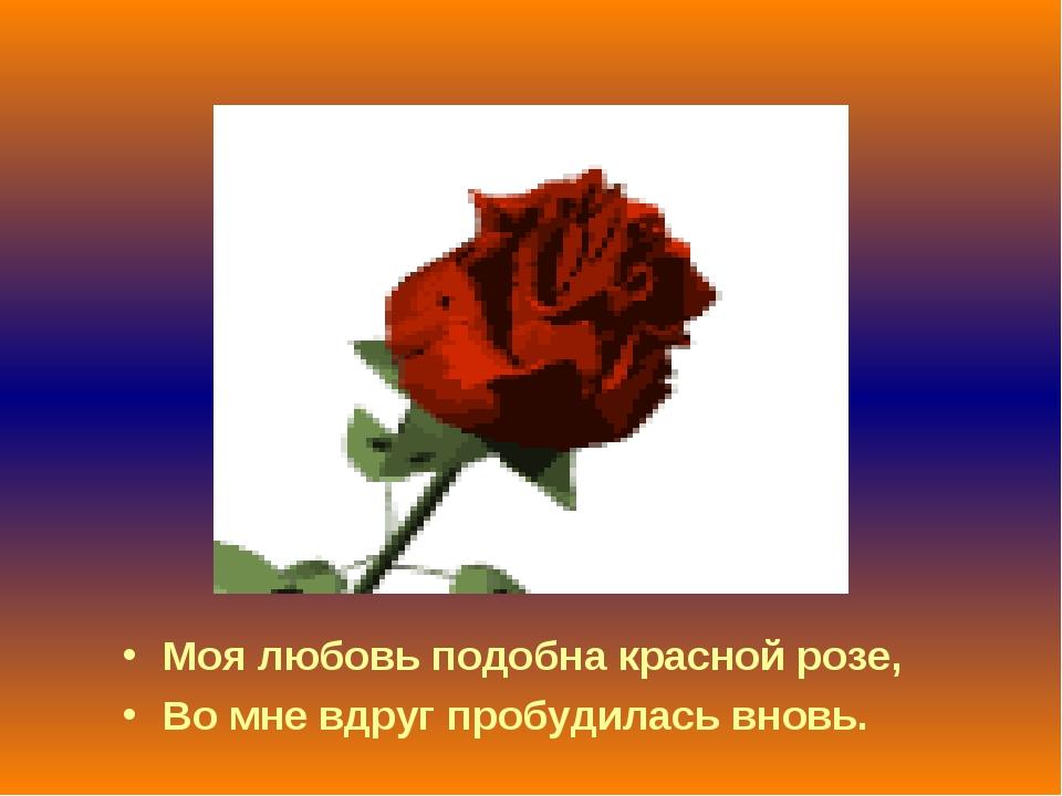 Моя любовь подобна красной розе, Во мне вдруг пробудилась вновь.