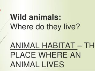 Wild animals: Where do they live? ANIMAL HABITAT – THE PLACE WHERE AN ANIMAL