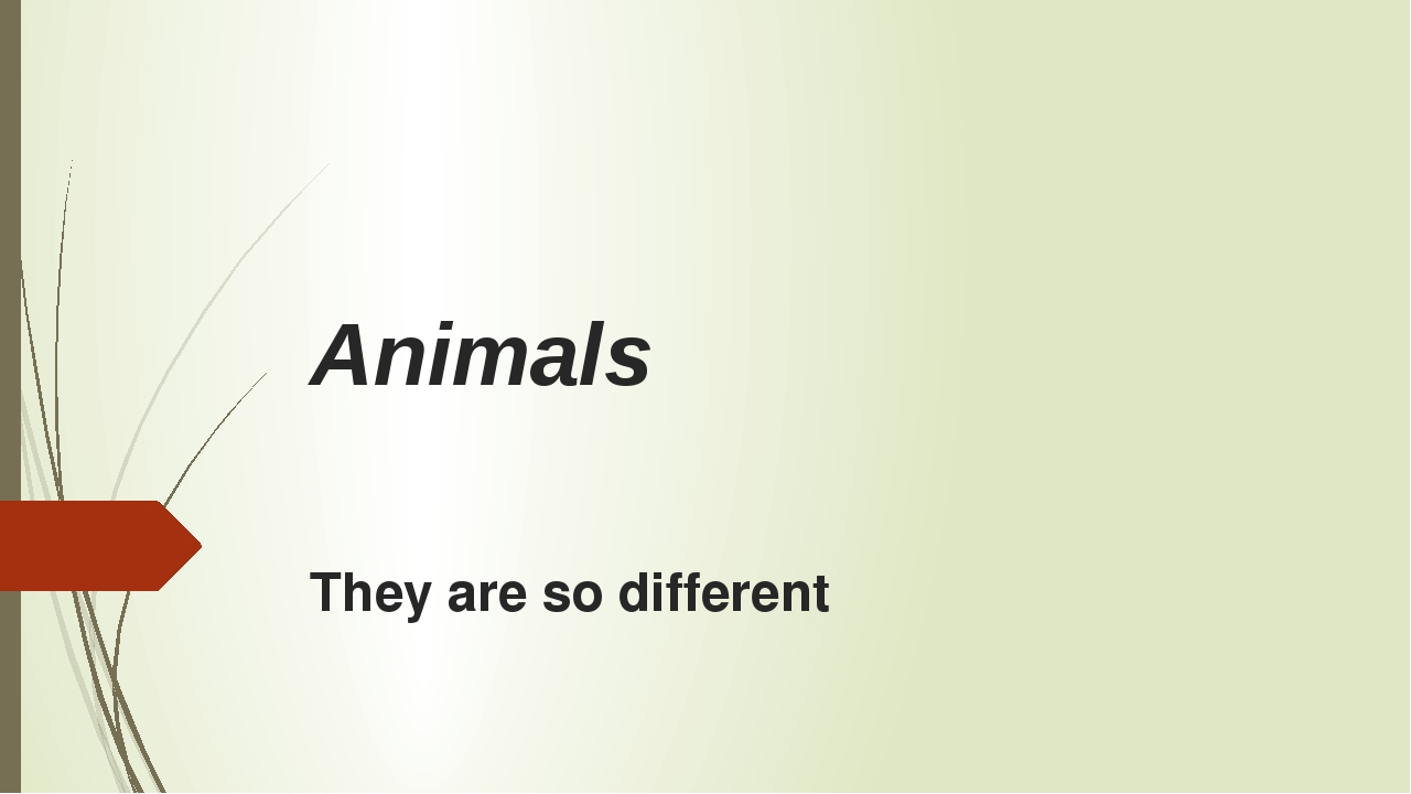 Animals They are so different
