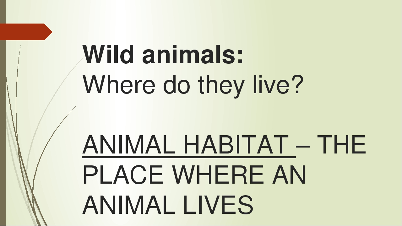 Wild animals: Where do they live? ANIMAL HABITAT – THE PLACE WHERE AN ANIMAL...