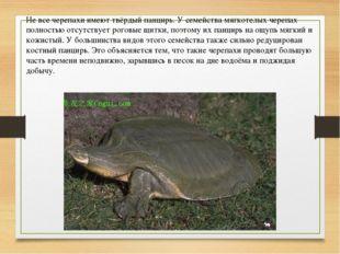 Не все черепахи имеют твёрдый панцирь. У семейства мягкотелых черепах полност