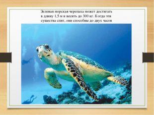 Зеленая морская черепаха может достигать в длину 1,5 м и весить до 300 кг. Ко