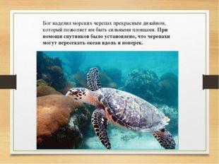 Бог наделил морских черепах прекрасным дизайном, который позволяет им быть си