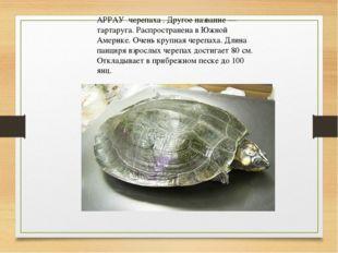 АРРАУ черепаха . Другое название — тартаруга. Распространена в Южной Америке