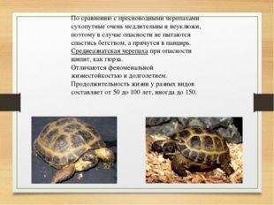 По сравнению с пресноводными черепахами сухопутные очень медлительны и неуклю