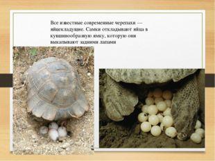Все известные современные черепахи— яйцекладущие. Самки откладывают яйца в к