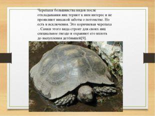 Черепахи большинства видов после откладывания яиц теряют к ним интерес и не п