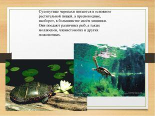 Сухопутные черепахи питаются в основном растительной пищей, а пресноводные, н