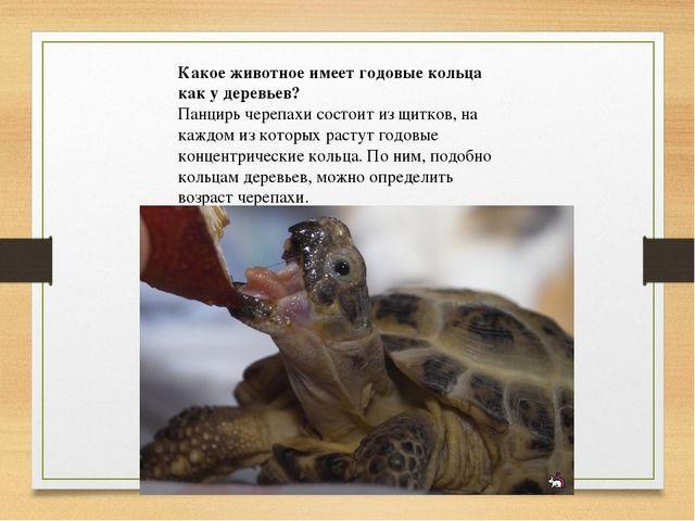 Какое животное имеет годовые кольца как у деревьев? Панцирь черепахи состоит...