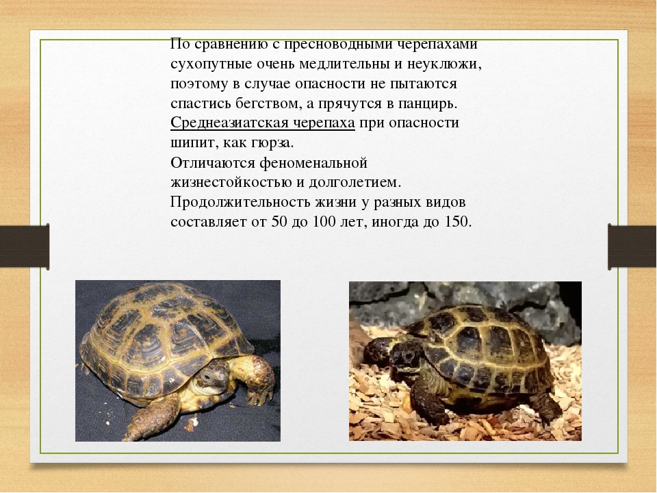 По сравнению с пресноводными черепахами сухопутные очень медлительны и неуклю...