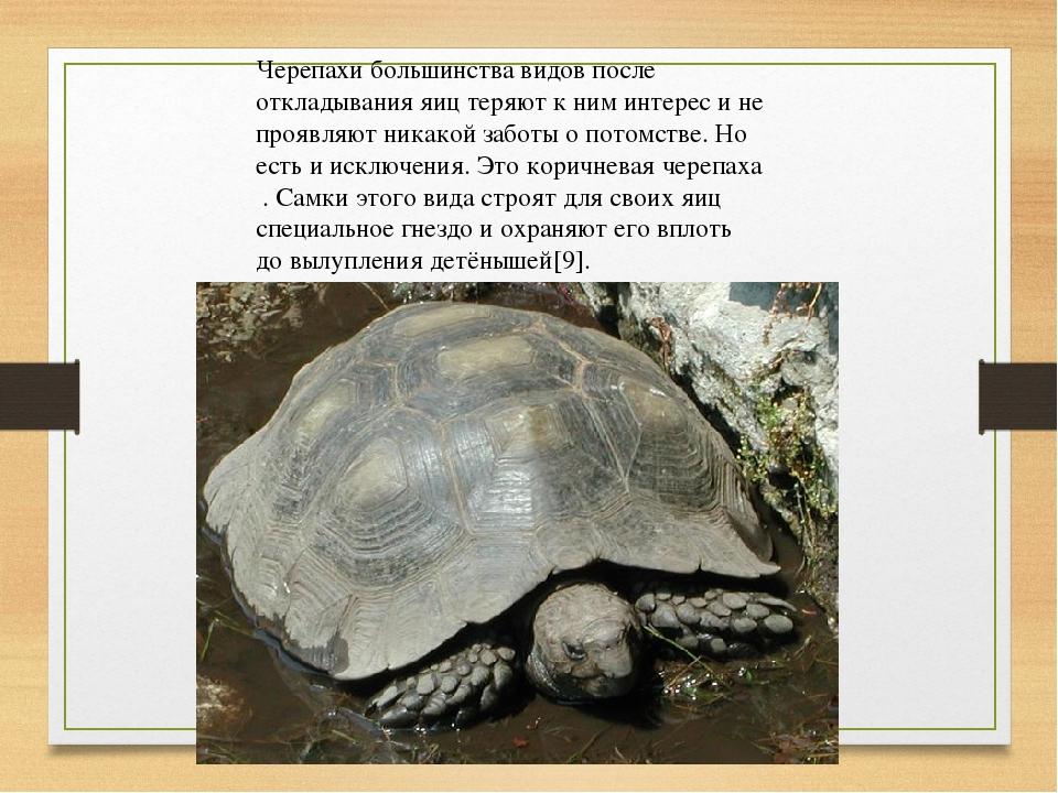 Черепахи большинства видов после откладывания яиц теряют к ним интерес и не п...