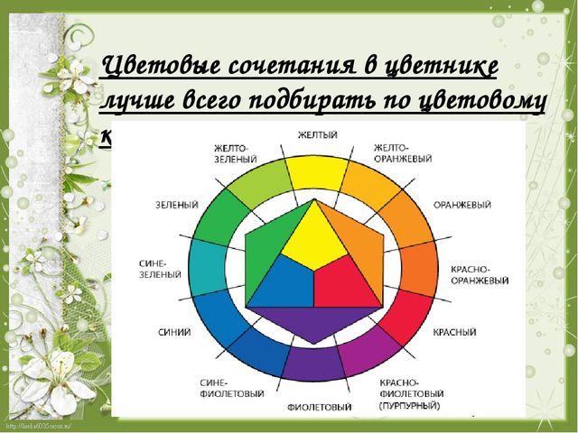 Цветовые сочетания в цветнике лучше всего подбирать по цветовому кругу