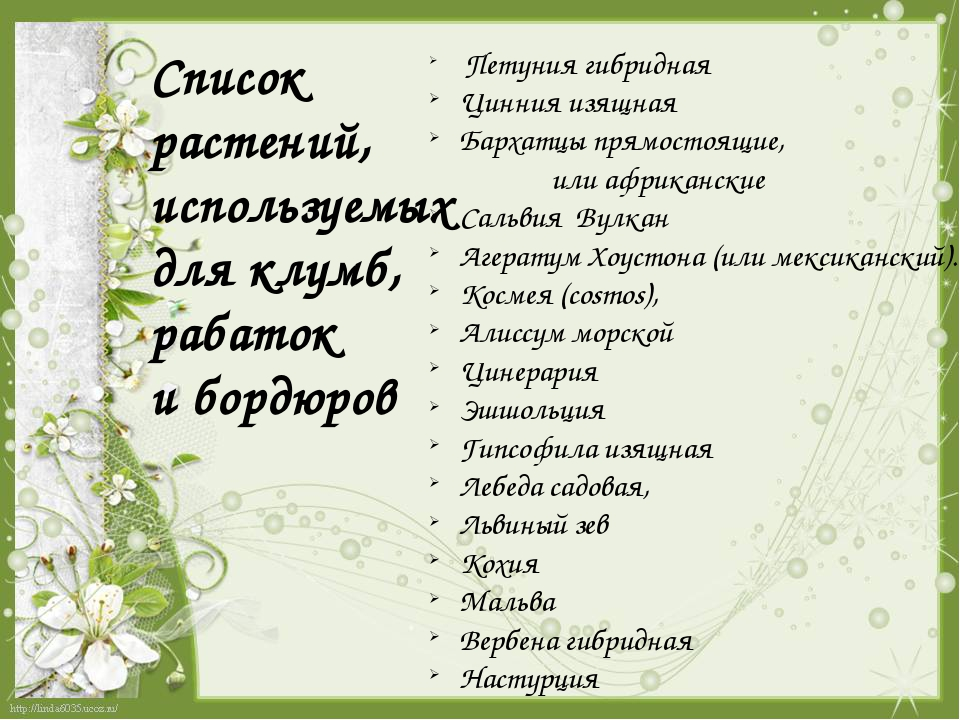 Список растений, используемых для клумб, рабаток и бордюров Петуния гибридная...