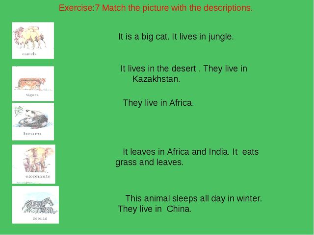 Exercise:7 Match the picture with the descriptions. It is a big cat. It lives...