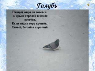 Птицей мира он зовется. С крыш стрелой к земле несется, Если видит гору кроше