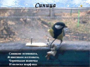 Синица Спинкою зеленовата, Животиком желтовата, Черненькая шапочка И полоска
