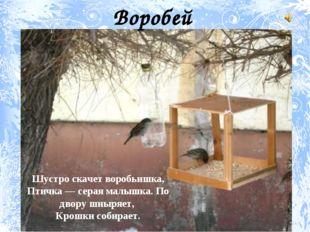 Шустро скачет воробьишка, Птичка — серая малышка. По двору шныряет, Крошки со