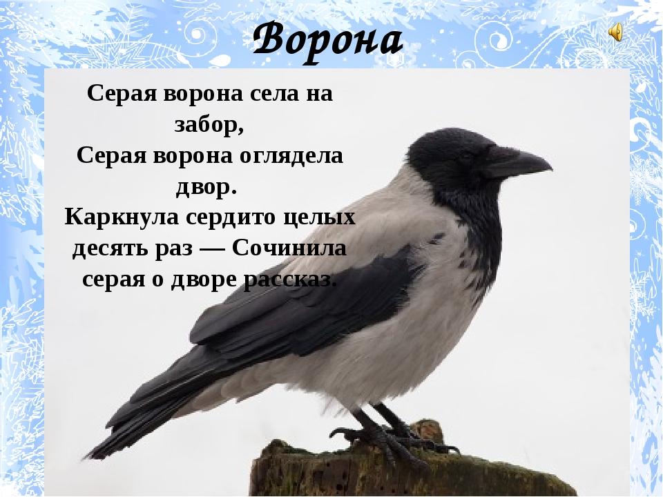 Ворона Серая ворона села на забор, Серая ворона оглядела двор. Каркнула серди...