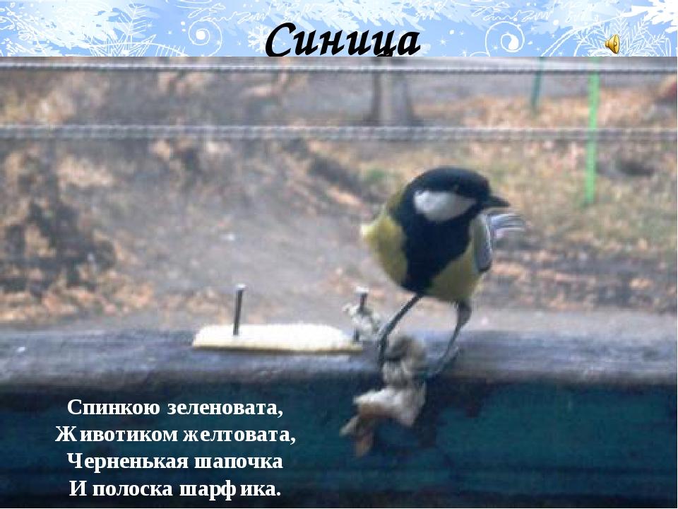 Синица Спинкою зеленовата, Животиком желтовата, Черненькая шапочка И полоска...