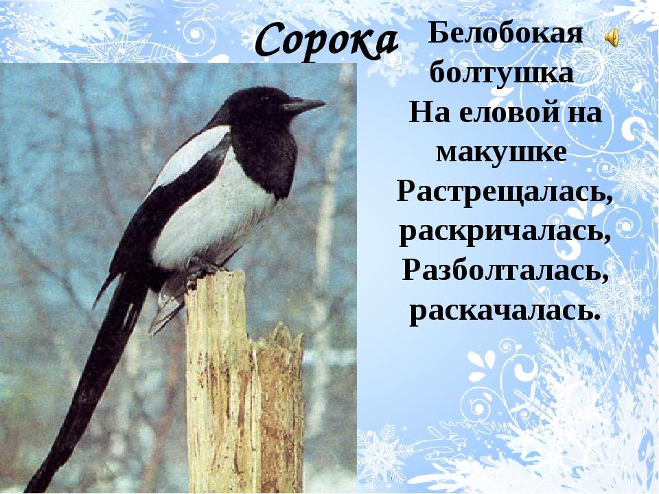 Белобокая болтушка На еловой на макушке Растрещалась, раскричалась, Разболтал...
