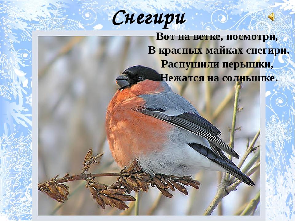 Снегири Вот на ветке, посмотри, В красных майках снегири. Распушили перышки,...
