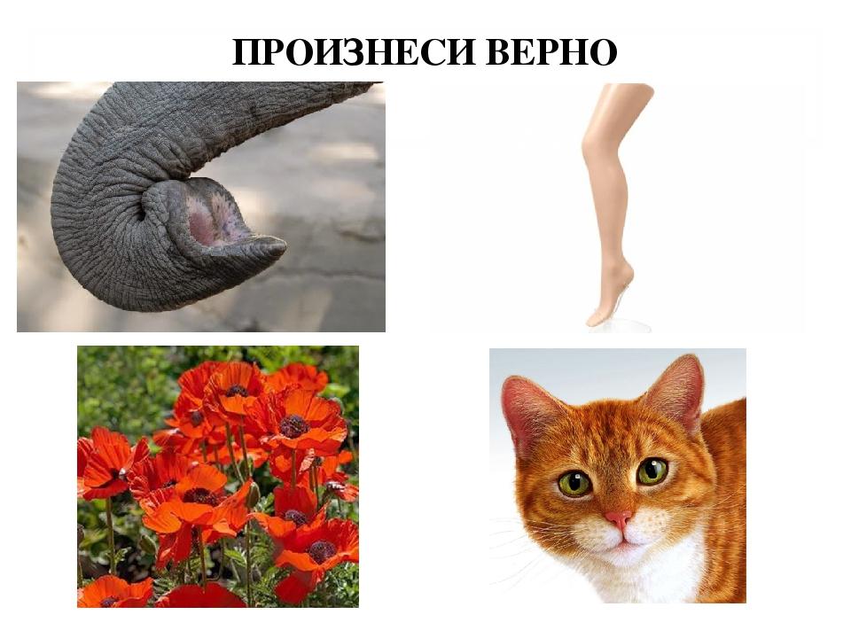ПРОИЗНЕСИ ВЕРНО