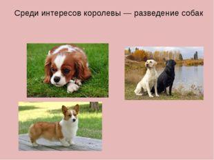 Среди интересов королевы— разведение собак