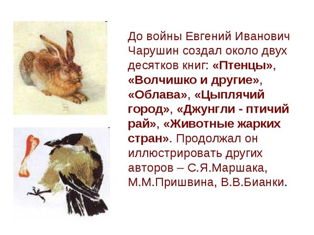 До войны Евгений Иванович Чарушин создал около двух десятков книг: «Птенцы»,...
