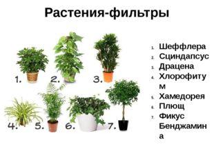 Растения-фильтры Шеффлера Сциндапсус Драцена Хлорофитум Хамедорея Плющ Фикус