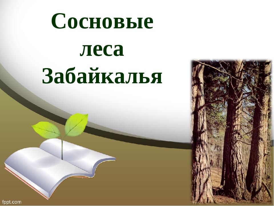 Сосновые леса Забайкалья