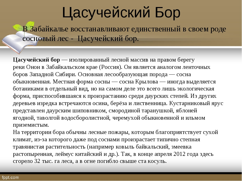 Цасучейский Бор В Забайкалье восстанавливают единственный в своем роде соснов...