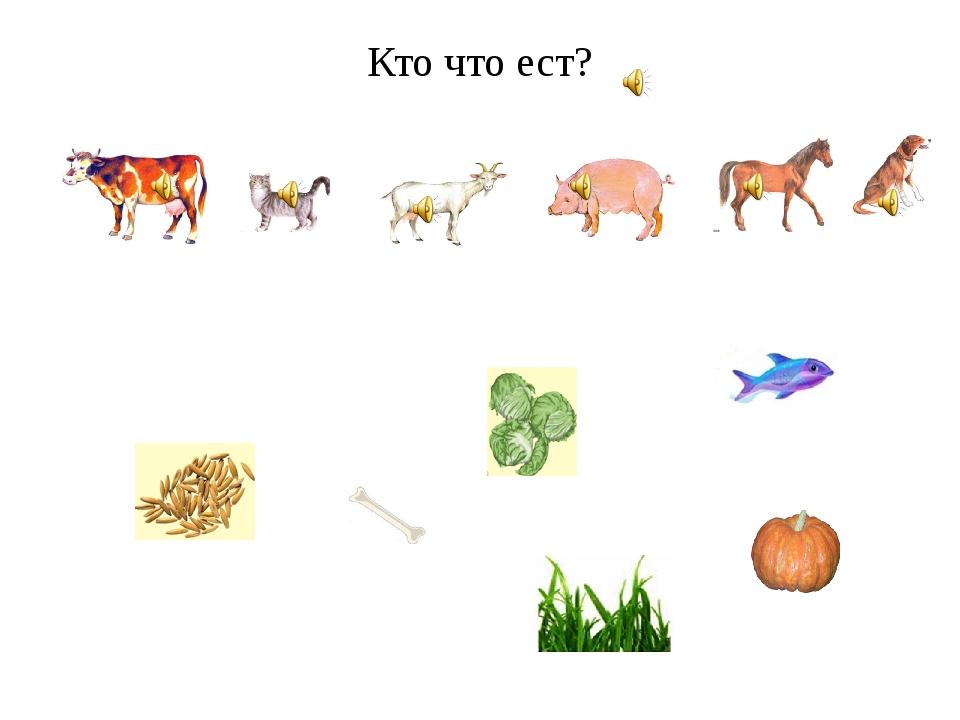 Чем питаются домашние животные в картинках для детей, котятами телефон