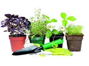 Значение домашних растений в жизни человека Кенжибекова Арина 2 «Б» класс СО