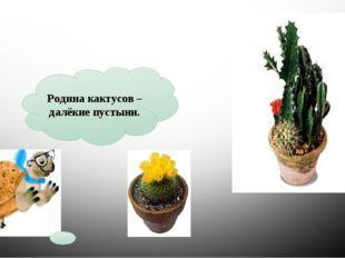 Родина кактусов – далёкие пустыни. КАКТУС