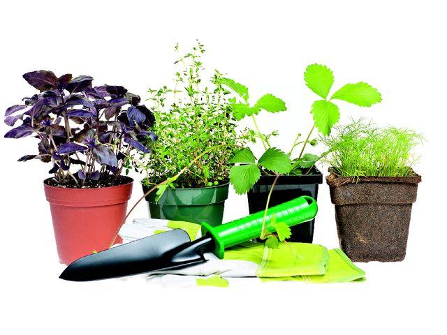 Значение домашних растений в жизни человека Кенжибекова Арина 2 «Б» класс СО...