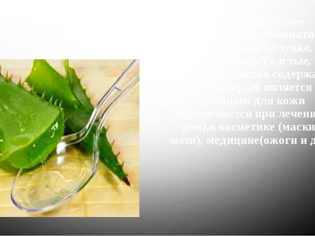 Алоэ - находит свое применение в гомеопатии (заболевания желудка, кишечника)....