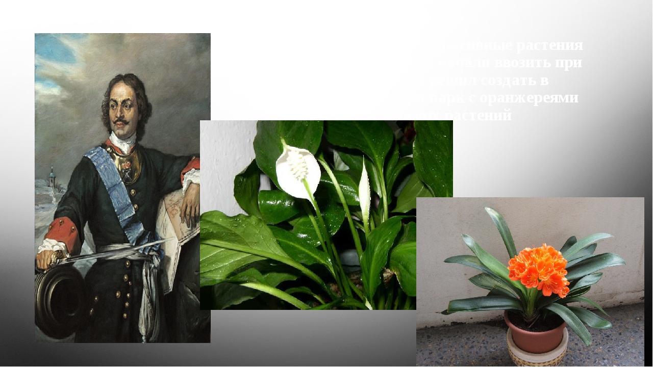 В Россию цветочно-декоративные растения в больших количествах начали ввозить...