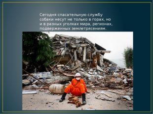 Сегодня спасательную службу собаки несут не только в горах, но и в разных уго