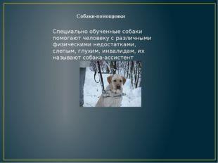 Собаки-помощники Специально обученные собаки помогают человеку с различными ф