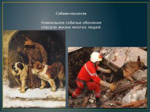 Собаки-спасатели Уникальное собачье обоняние спасало жизни многих людей.