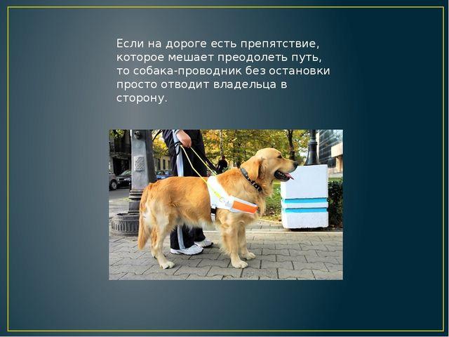 Если на дороге есть препятствие, которое мешает преодолеть путь, то собака-пр...