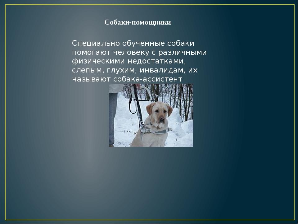 Собаки-помощники Специально обученные собаки помогают человеку с различными ф...