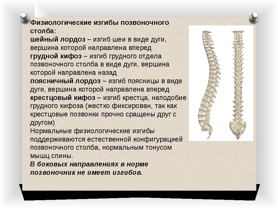 Физиологические изгибы позвоночного столба: шейный лордоз –изгиб шеи в виде...