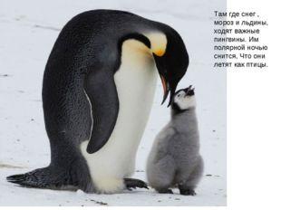 Там где снег , мороз и льдины, ходят важные пингвины. Им полярной ночью снитс